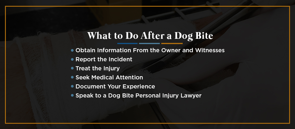 What to Do After a Dog Bite [list]